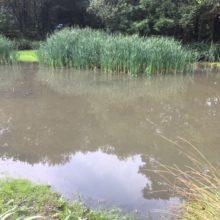 Dickies Pond at Pinewood-1