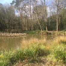Dickies Pond at Pinewood-2