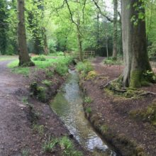 Woodland and stream 2