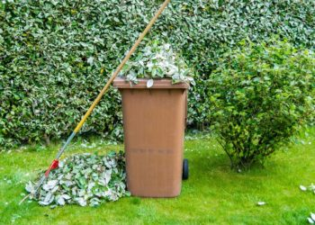 wheelie bin and rake in a garden with a hedge